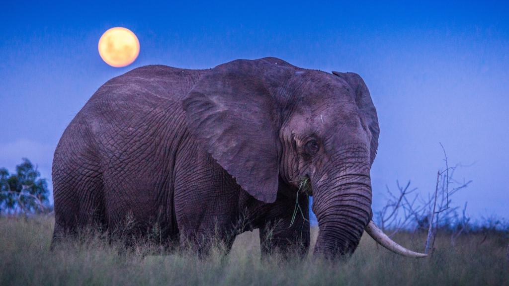 Honeymoon Destinations - South Africa