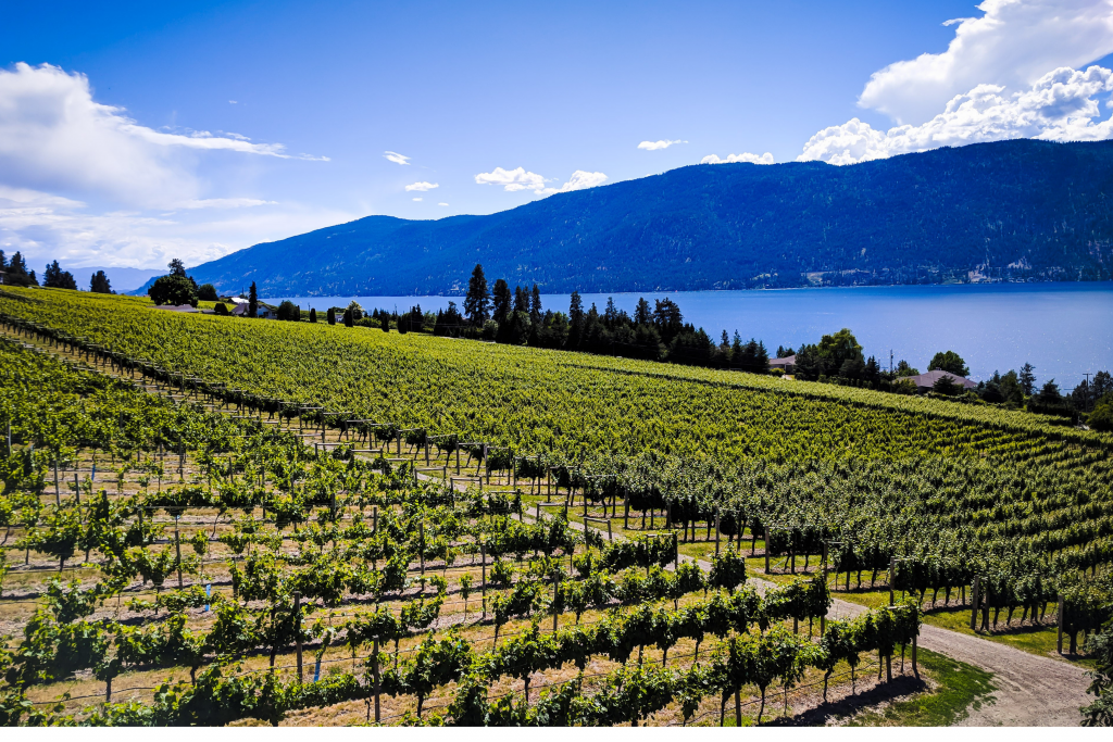 wine country in bc